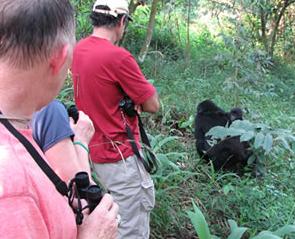 bwindi-forest-gorilla-trek