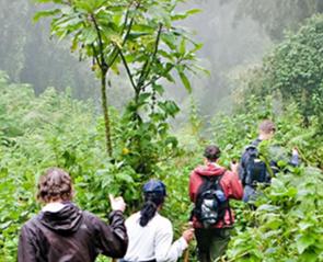 gorilla-tour-uganda