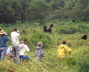 rwanda-gorillas