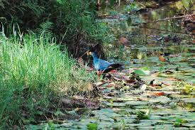2 days kibale birding safari Uganda tour / 2 days Uganda birding safari in kibale national park- Uganda Safari News