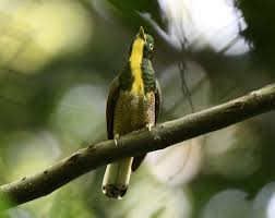 2 Days Semuliki Birding Safari Uganda Tour/ 2 Days Uganda Birding Safari In Semuliki National Park- Uganda Safari News